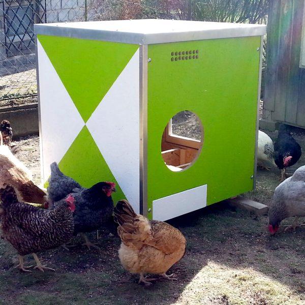 Hendlwürfel für bis zu sechs Legehühner mit unserer Speziallackierung.