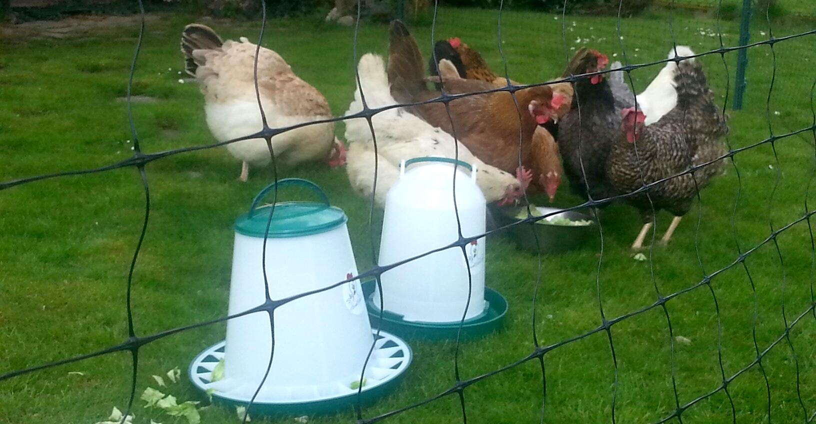 Unser Zaun für eure Hühner, Hühnerzaun oder Geflügelzaun.