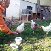 Stephan mit seinen Hühnern im Garten