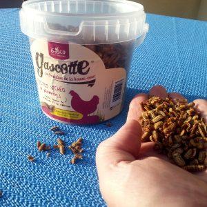 Getrocknete Insekten im Kübel für Geflügel als Leckerli