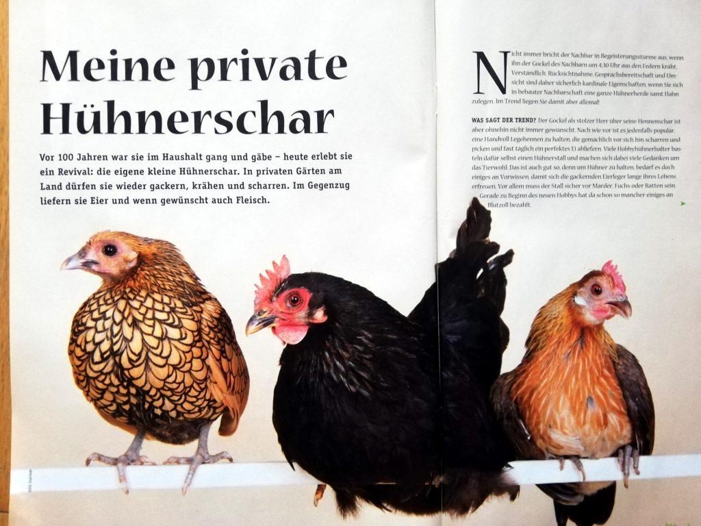 Meine private Hühnerschar